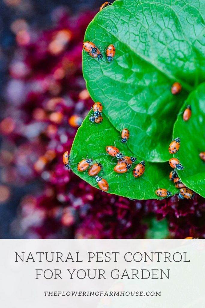 keep your garden pest free