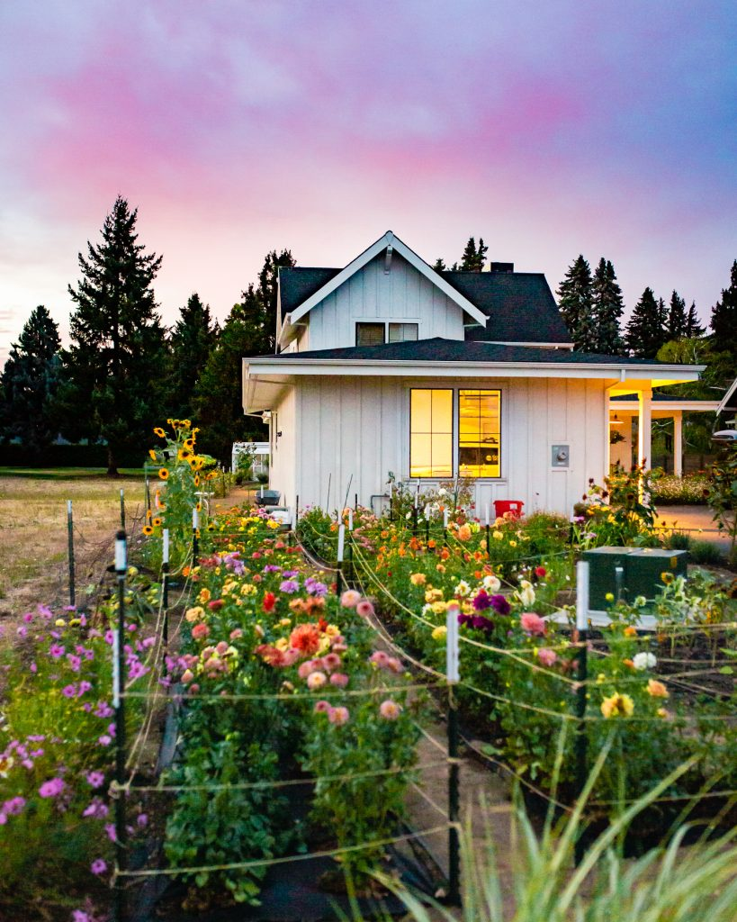 the flowering farmhouse at sunset