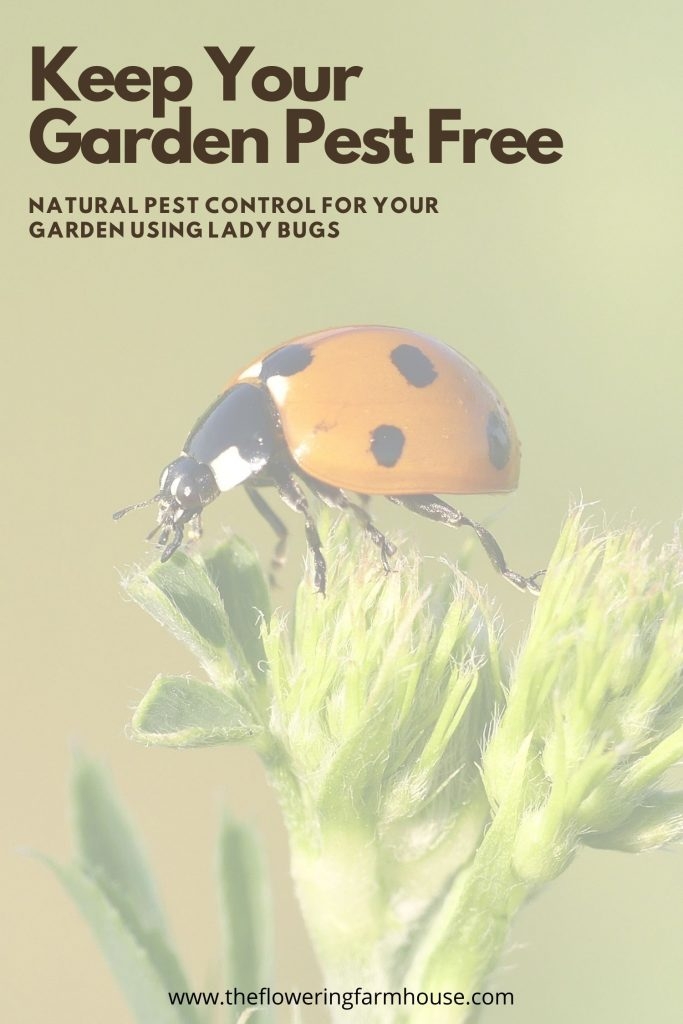 keep your garden pest free with ladybugs