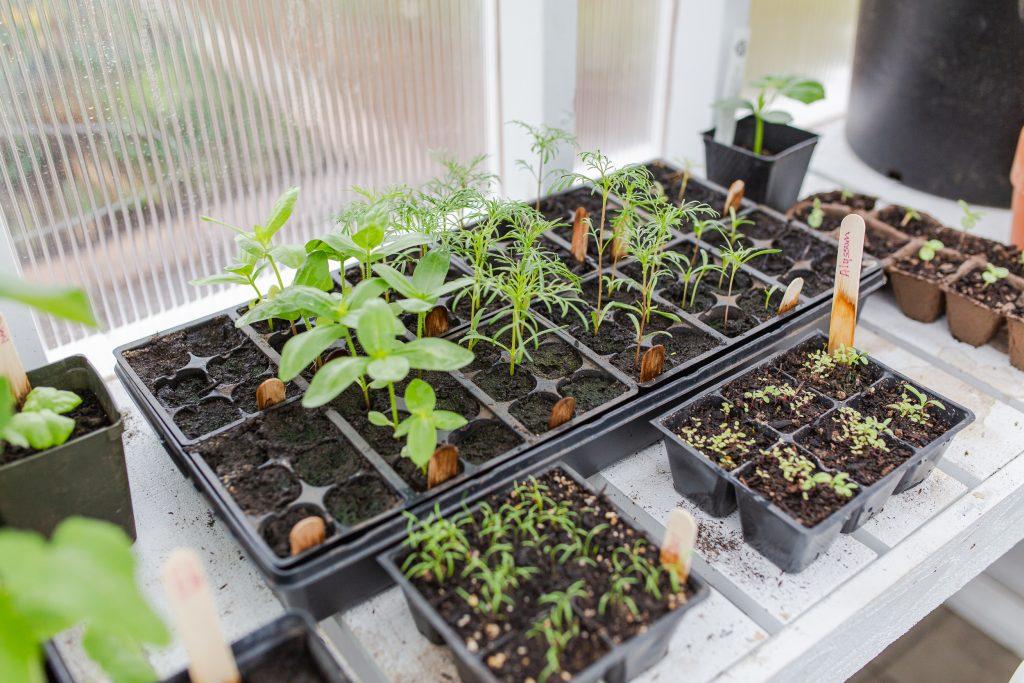 photo of seedlings