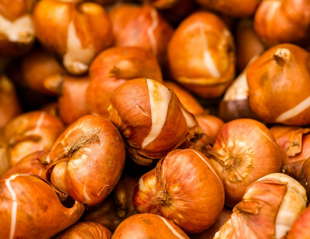 prepare your garden for winter by planting fall bulbs